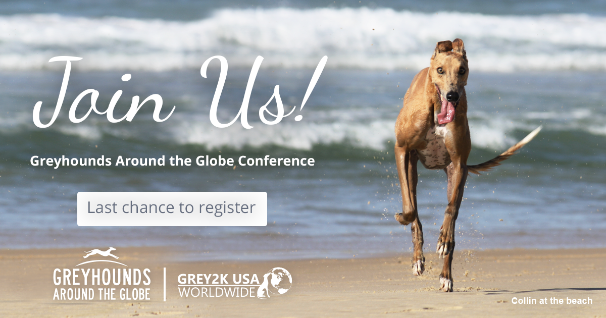 Last chance to register for the Greyhounds Around the Globe conference