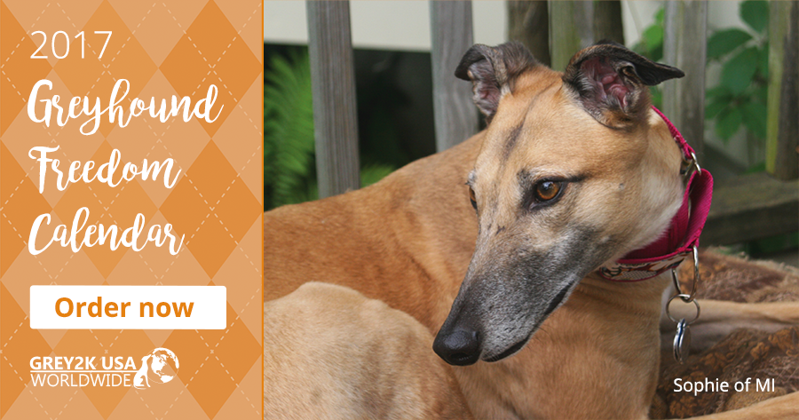 Order the Greyhound Freedom Calendar now!