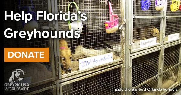 Help Florida's greyhounds