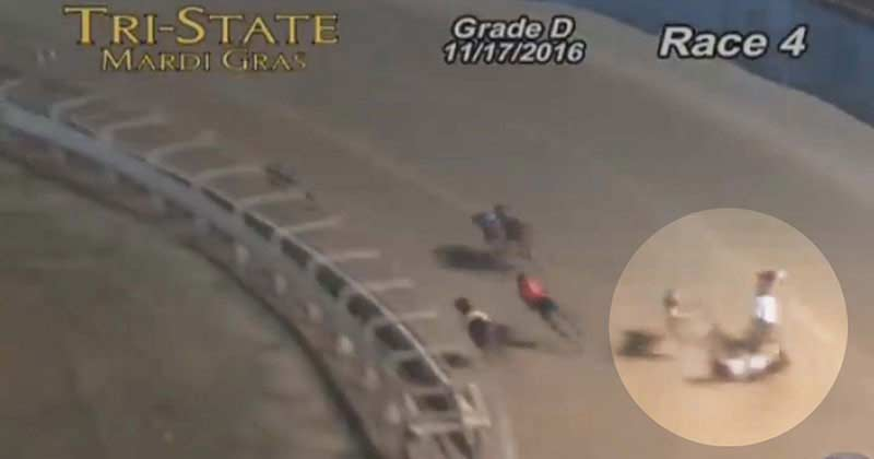 A greyhound dies following a collision at a U.S. track