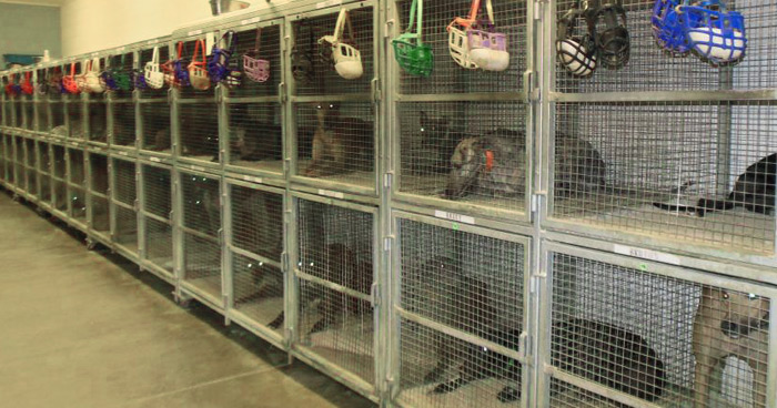 Caged greyhounds at Wheeling Island in West Virginia