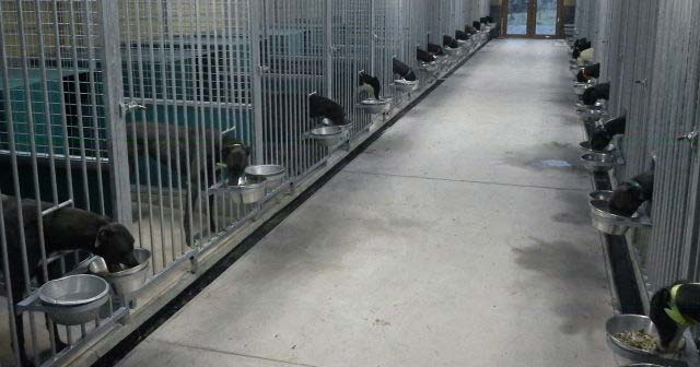 Drumcrow Kennels in Northern Ireland