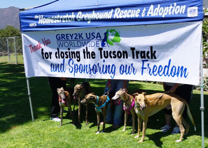 Sponsored greyhounds from Tucson Greyhound Park arrive at Homestretch Greyhound Rescue and Adoption