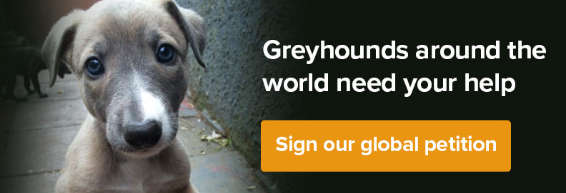 Sign our global petition