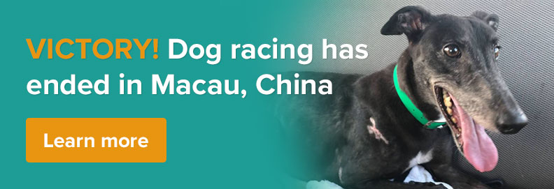 VICTORY! Dog racing ends in Macau