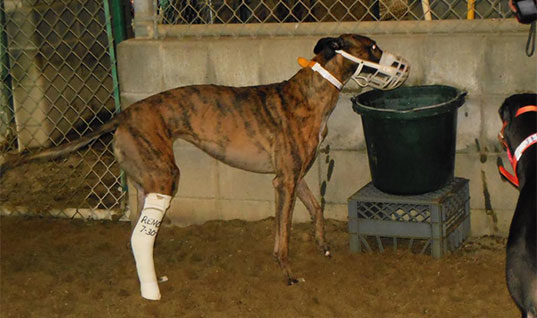 Sign the petition to end greyhound racing subsidies in West Virginia