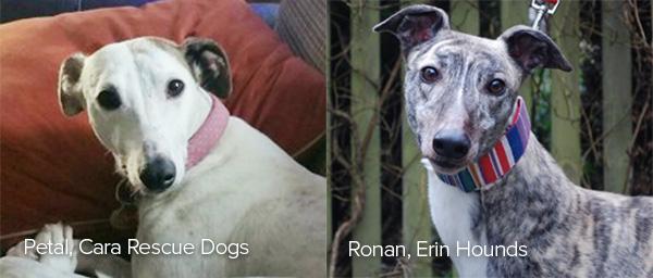 Petal, Cara Rescue Dogs; Ronan, Erin Hounds; Champ, Dogs Trust