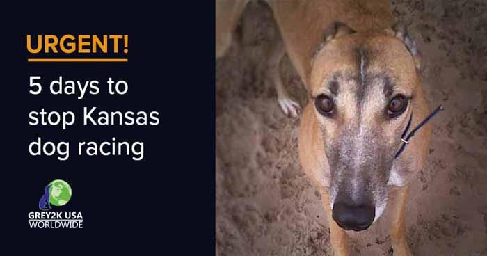 URGENT 5 days to stop Kansas dog racing