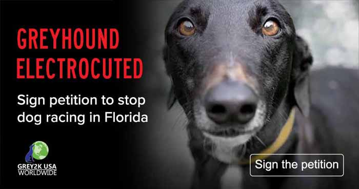 GREYHOUND ELECTROCUTED Sign petition to stop dog racing in Florida