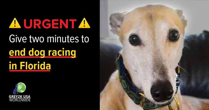 URGENT: Give two minutes to end dog racing in your state