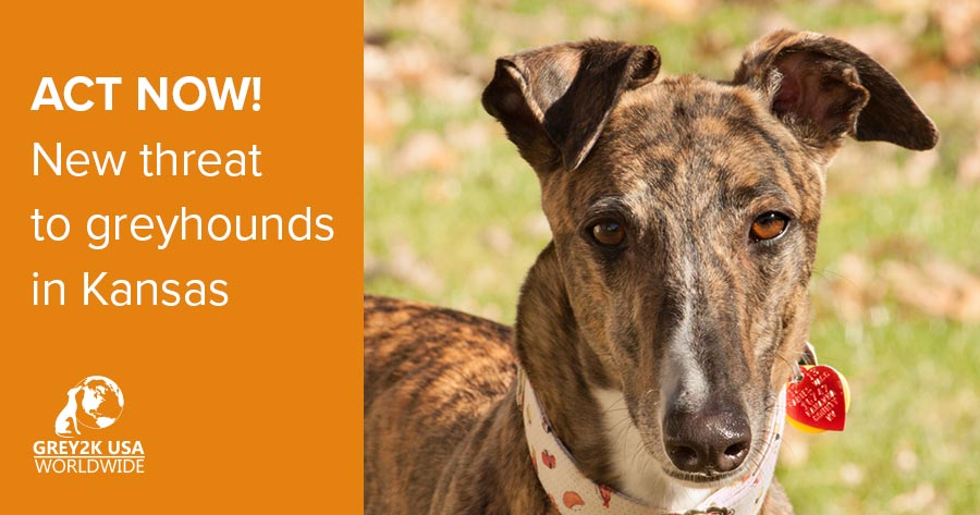 ACT NOW! New threat to greyhounds in Kansas