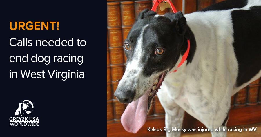 URGENT! Calls needed to end dog racing in West Virginia
