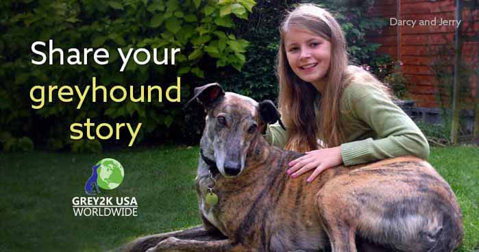 Share your greyhound story