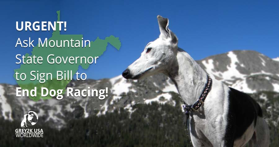 URGENT! End Dog Racing in West Virginia