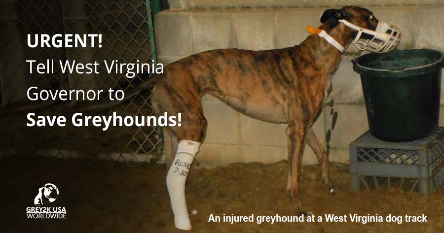 Tell WV Governor to Save Greyhounds!