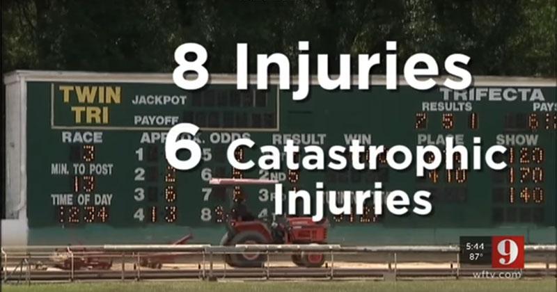 greyhound injuries