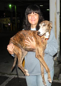 Rescued Guam Greyhound